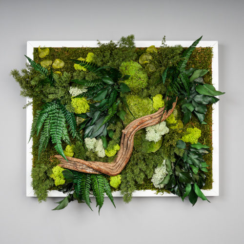 Tableau végétal stablisé Dvs green gallery