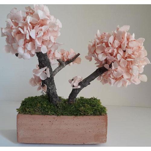 Bonsai reconstitue Hortensia rose dvs green gallery