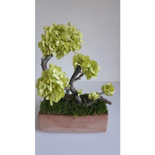 Bonsai reconstitue Hortensia vert pistache dvs green gallery