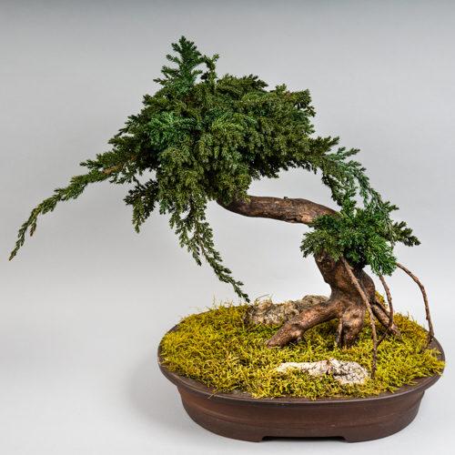 Bonsaï reconstitué végétal stabilisé Dvs green gallery