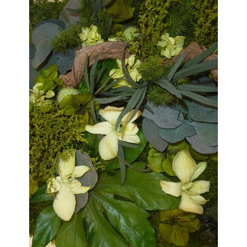 Tableau vegetal stabilise Orchidees jaune et vert dvs green gallery