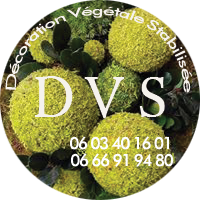 logo dvs green gallery
