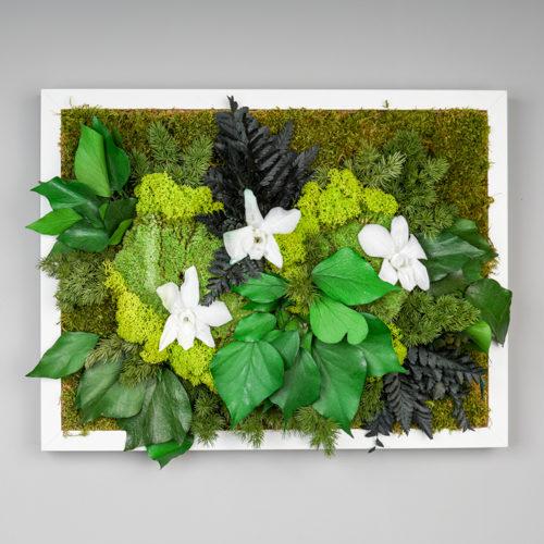 Tableau Sous Bois Orchidée