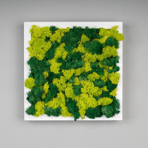 tableau carré lichen vert