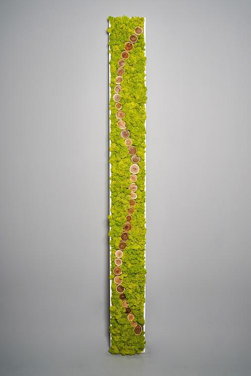 slim lichen et rondelles de bois